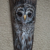 """Barred Owl - Palm Frond"" by Nancy Lauby"