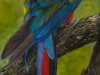 Scarlet Macaw by Nancy Lauby