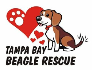 Tampa Bay Beagle Rescue logo